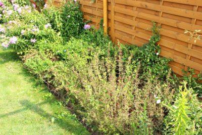 jak-sadzić-gardenbox-1