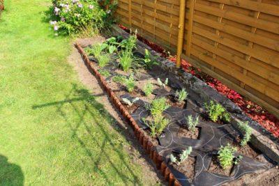 jak-sadzić-gardenbox-16