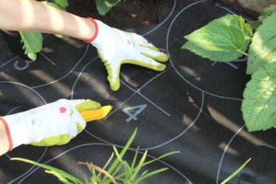 jak-sadzić-gardenbox-7