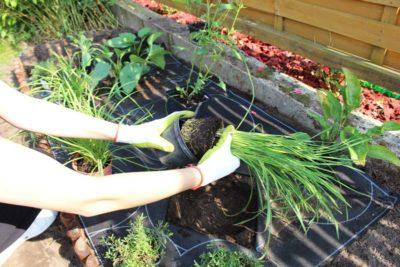 jak-sadzić-gardenbox-8