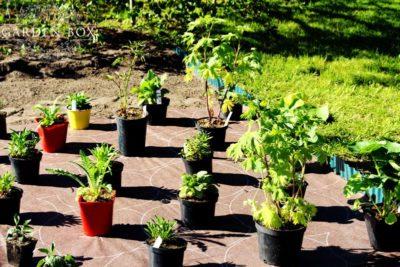 jak-sadzić-ogród-angielski-2