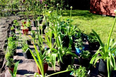 jak-sadzić-ogród-angielski-3