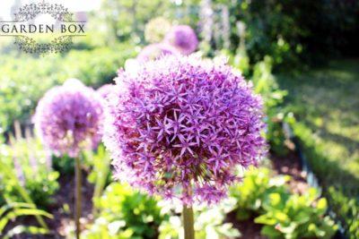 jak-sadzić-ogród-angielski-4