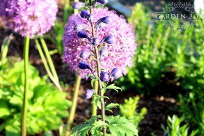 jak-sadzić-ogród-angielski-5