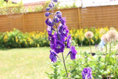 jak-sadzić-ogród-angielski-6