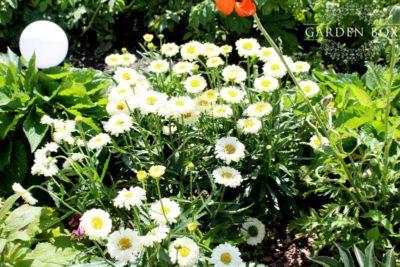 jak-sadzić-ogród-polski-14