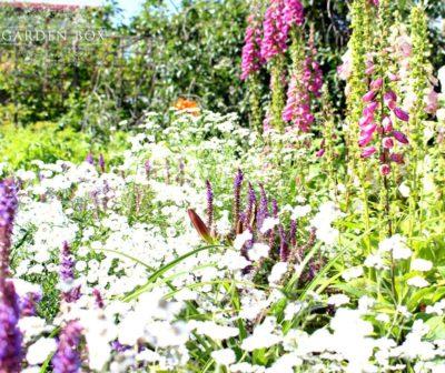 jak-sadzić-ogród-polski-8